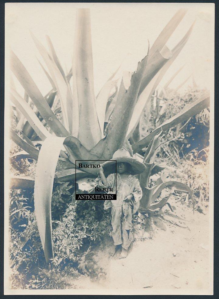 foto 1916 hugo brehme atzcapotzalco mexiko child in the shade of a century plant ebay. Black Bedroom Furniture Sets. Home Design Ideas